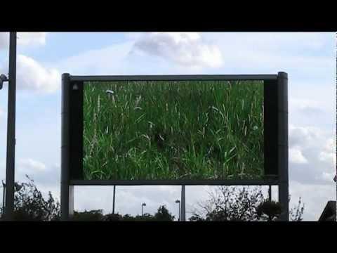 Walthamstow Marsh on the Big Screen