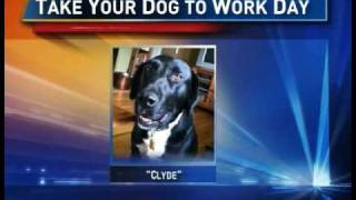 Dog Training - Al Holzer Of Bark Busters - Taking Your Dog To Work