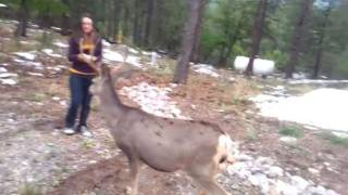 Cori feeding a buck!  Brazos Canyon NM