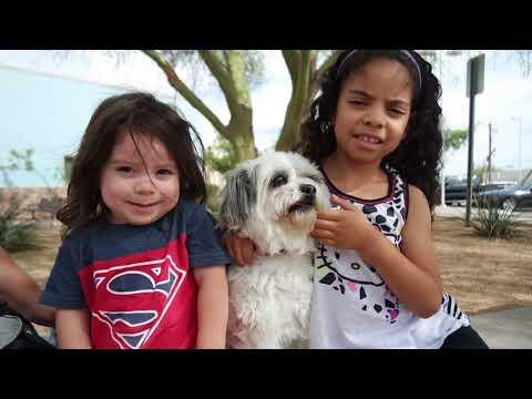 Community Spay and Neuter Program-The Arizona Pet Project