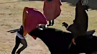 Кондор и бык борются за свободу на фестивале в Перу (новости)