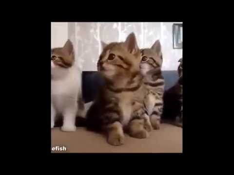 funny cat videos for kids - YouTube Funny Cat Videos For Kids
