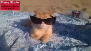 Funny cats. Смешные коты, самые веселые видео о животных сборник №6, приколы 2015