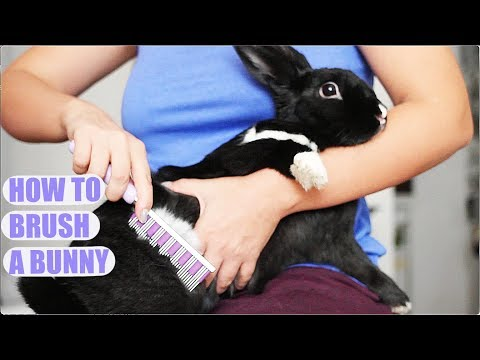 How to Properly Brush a Rabbit