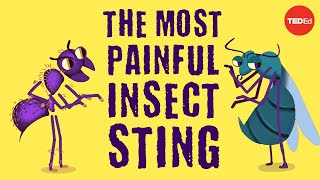 The worlds most painful insect sting - Justin Schmidt