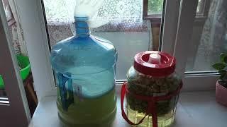 Приготовление яблочного вина в домашних условиях