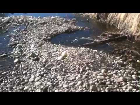 HOW TO FIND GOLD!!!! IN A GRAVEL BAR!!!