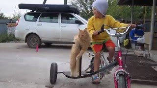 Кот на велосипеде