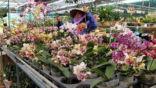 Làng Hoa Sa Đéc những ngày đẹp nhất, qua 20 Tết Canh Tý hoa về phố ra chợ