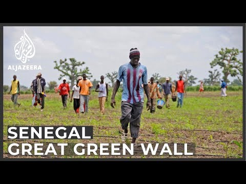 Great green wall: Villagers' defence against desert