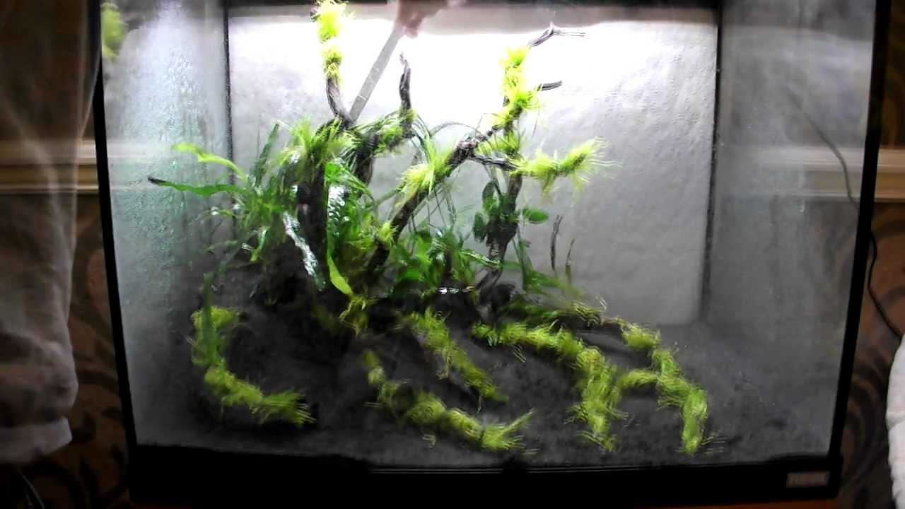 Nice Aquascape Using Tropica Plants, Substrate And Fertilizers In A Fluval Roma  90