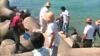 ヒラメの稚魚の放流