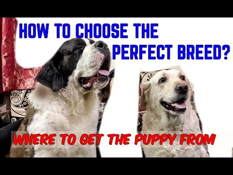 HOW TO CHOOSE THE PERFECT BREED | FROM WHERE TO GET A PUPPY |PUPPY MILLS