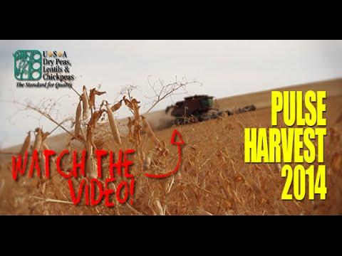 USA Pulse Harvest 2014