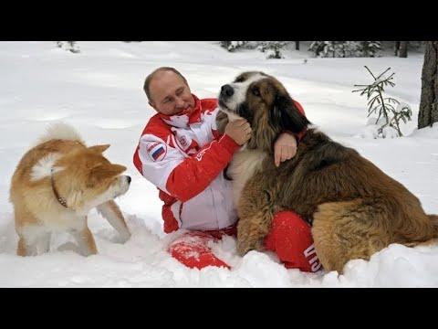 Смотреть Алабай Верный и другие: сколько собак на псарне Путина - МИР24 онлайн