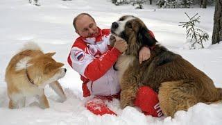 Алабай Верный и другие: сколько собак на псарне Путина - МИР24