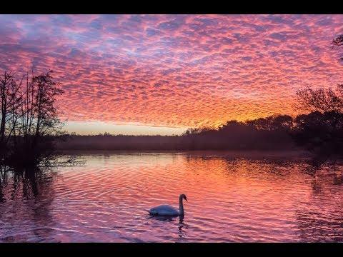 Fleet Pond, Fleet, Hampshire, UK - filmed with the DJI Mavic Pro in 4K
