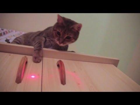 Cats Vs Laser Pointer Compilation