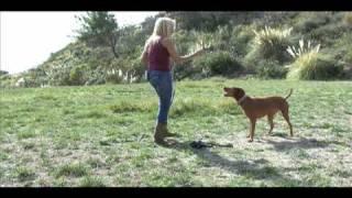 Dina Zaphiris On Americas Dog Trainer (2 Of 2)