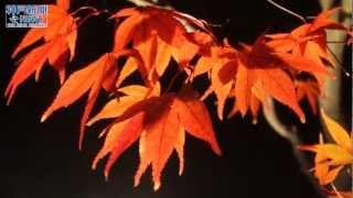 「有馬温泉太閤の湯」紅葉ライトアップ