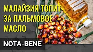 Малайзия считает, что пальмовое масло - это подарок богов