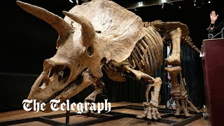 video: Watch: Largest triceratops dinosaur skeleton sells for £5.6m