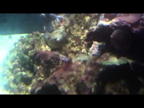 40 gallon soft coral reef tank wit trigger fish