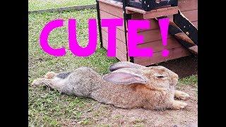 CUTE! Funny Bunny - Farm Animals