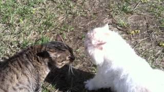"""Кот """"Боня"""" ругается матом (жара)"""