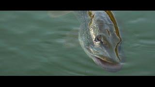 Zwiastun Kanału FishingWithAce - Jesień 2014!