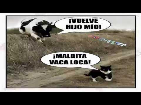 Meme De La Vaca Y El Gato Para Carcajear Youtube