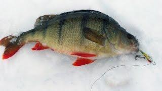 Уроки по ловле окуня зимой!
