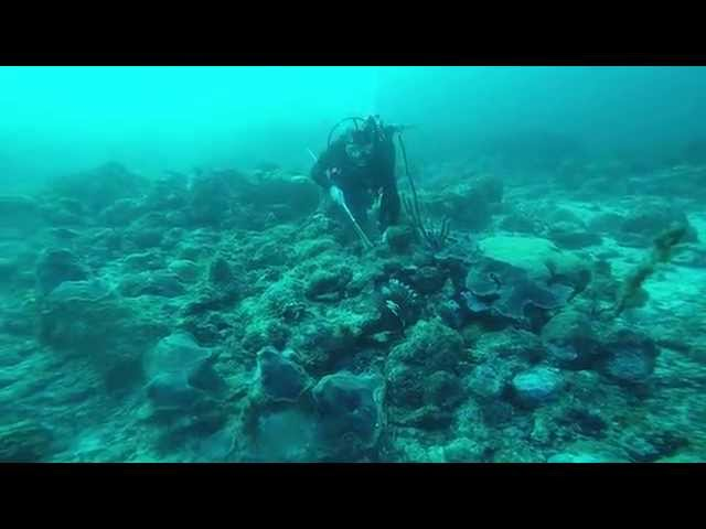 Lionfish Spear Fishing Video Clip # 4. Aruba Jan 25th 2015