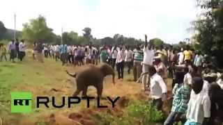 India: Baby elephant chases villagers after being rescued from well