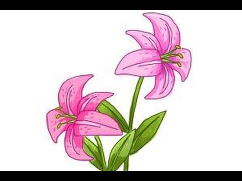 How to draw a stargazer lily youtube ccuart Choice Image