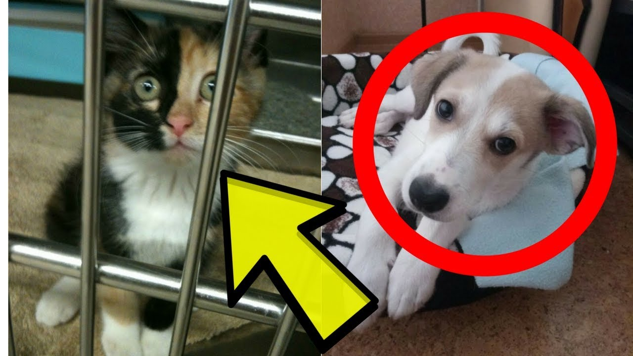 16Animals That Were Destined toBeAdopted ByTheir Owners