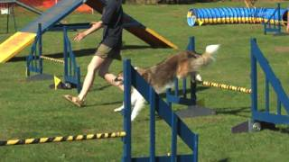 Druac - Dogs 'r Us Agility Club Open Day