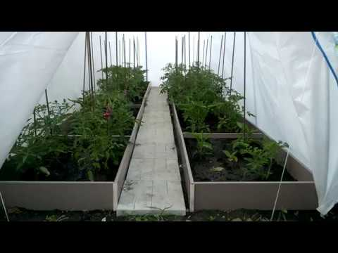 Грядки Даяс с высаженной молодой рассадой