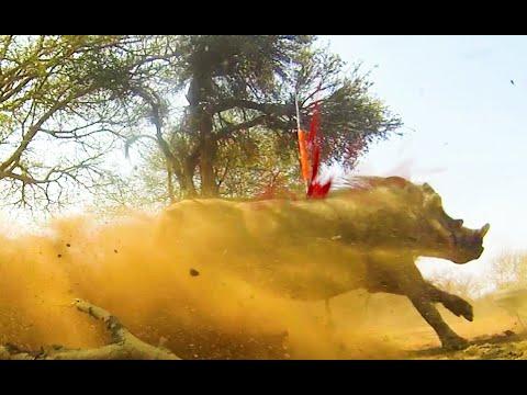 18 Wild Amazing Spear Hunts, World's best Spear Videos