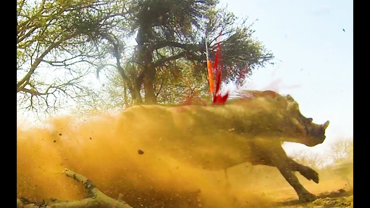Download 18 Wild Amazing Spear Hunts, World's best Spear Videos