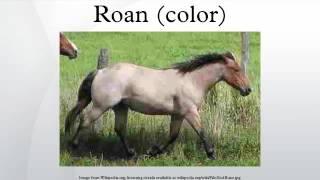 Roan (color)