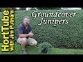 All About Groundcover Junipers - Erosion Control Planting On A Slope