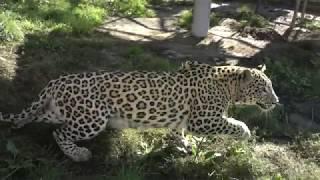 Grodno Zoo: welcome!