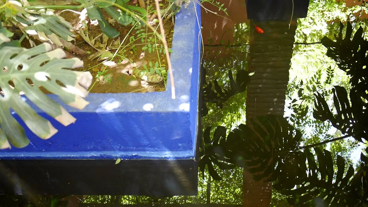 Majorelle Blue The Most Magical Shade Of Blue Filmed In