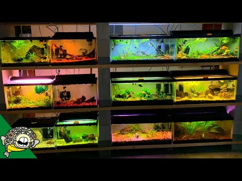 Check Out The Lighting In This Fish Room!
