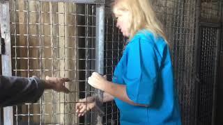 Новое место для содержания бездомных животных