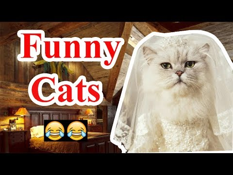 Funny Cat Compilation 2017 - Best Funny Cat Videos - LAUGH ALL DAYS - NOT TO LAUGH (Challenge)