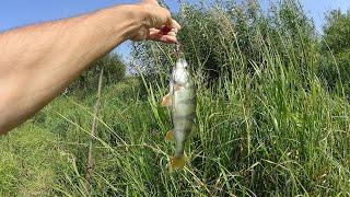 Лето рыбалка рыбалка на спиннинг щука голавль