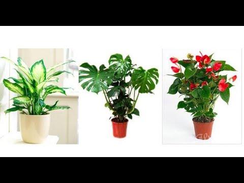 Вопрос: Правда ли, что есть такие растения, которые нельзя выращивать дома?
