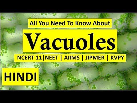 Vacuoles In Hindi | NEET | AIIMS | JIPMER | KVPY |